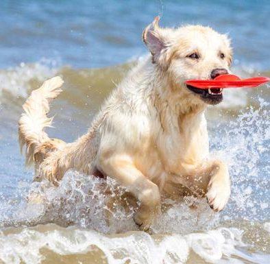 playas para ir con perro